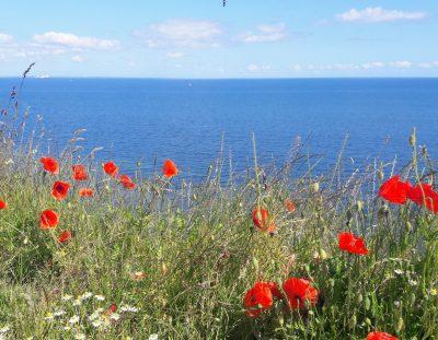 veldbloemen en vrijheid